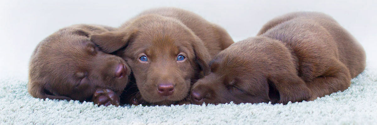Puppies on the carpet